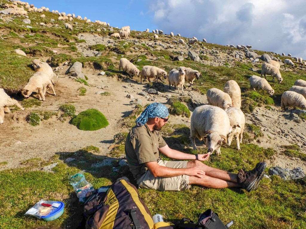 relaxing with the sheep in Bucegi
