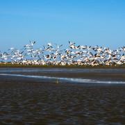 Birdswatching Danube Delta