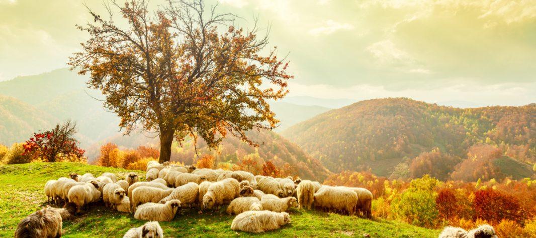 Grand tour of Romania