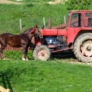 Horse against tractor