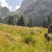 Carpathianas Romania