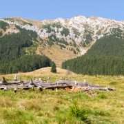 Carpathians hiking
