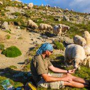 Wild Carpathians Romania