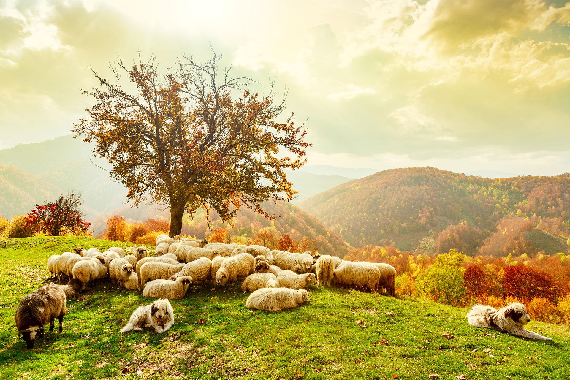 Budget friendly trips to romania romaniatourstore for Romania landscape