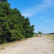 letea-subtropical-forest